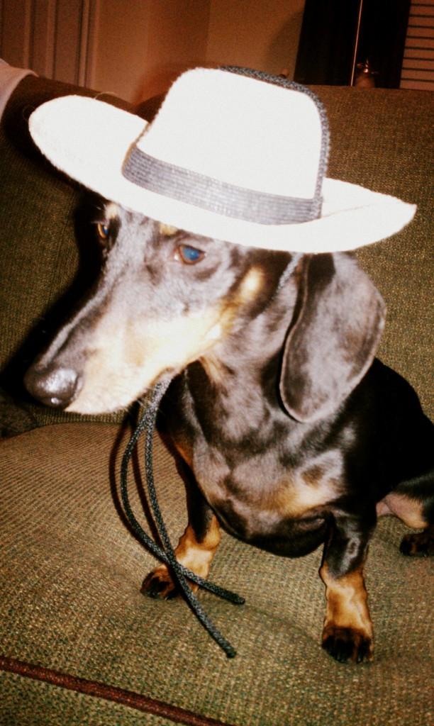 dog-cowboy-hat-612x1024.jpg