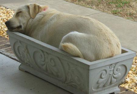 dog-in-flowerbed.img_assist_custom.jpg
