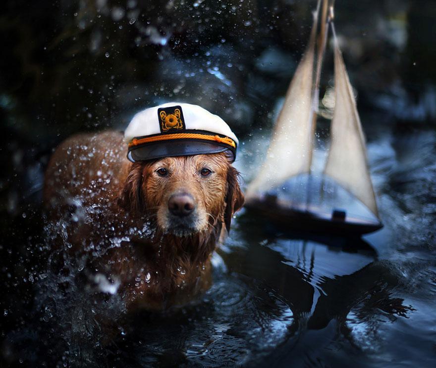 dog-photography-chuppy-golden-retriever-jessica-trinh-10.jpg
