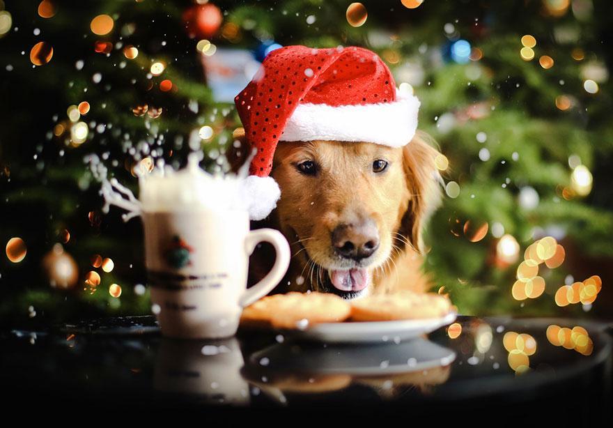 dog-photography-chuppy-golden-retriever-jessica-trinh-11.jpg