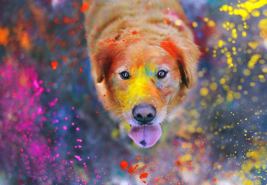 dog-photography-chuppy-golden-retriever-jessica-trinh-12.jpg