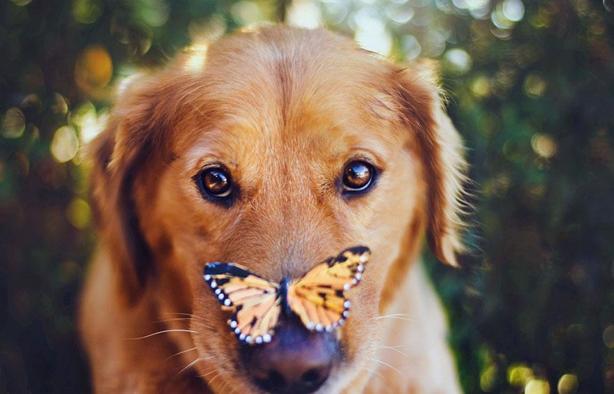 dog-photography-chuppy-golden-retriever-jessica-trinh-13.jpg