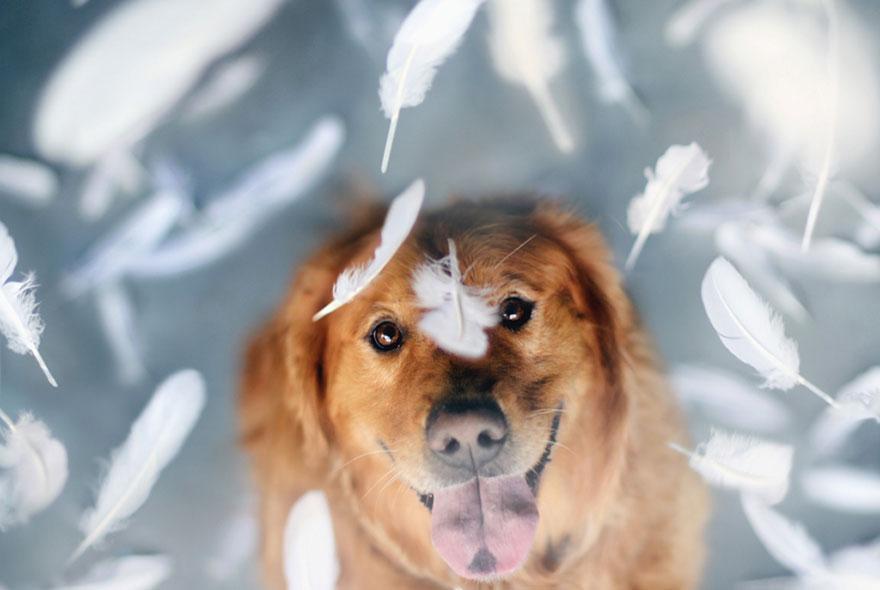 dog-photography-chuppy-golden-retriever-jessica-trinh-14.jpg