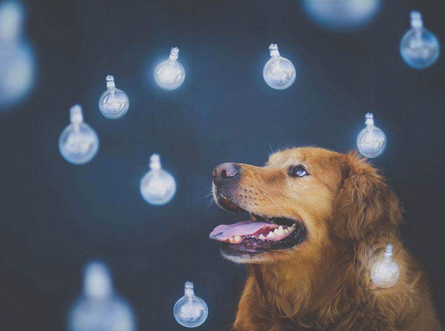 dog-photography-chuppy-golden-retriever-jessica-trinh-17.jpg