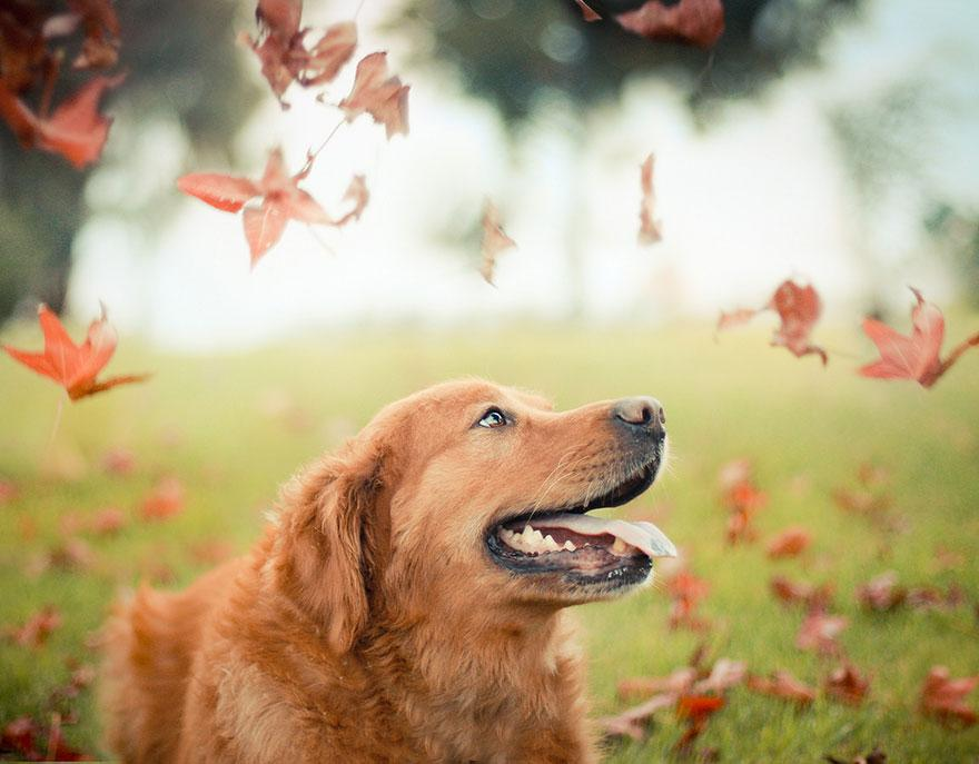 dog-photography-chuppy-golden-retriever-jessica-trinh-18.jpg