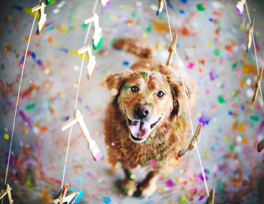 dog-photography-chuppy-golden-retriever-jessica-trinh-19.jpg