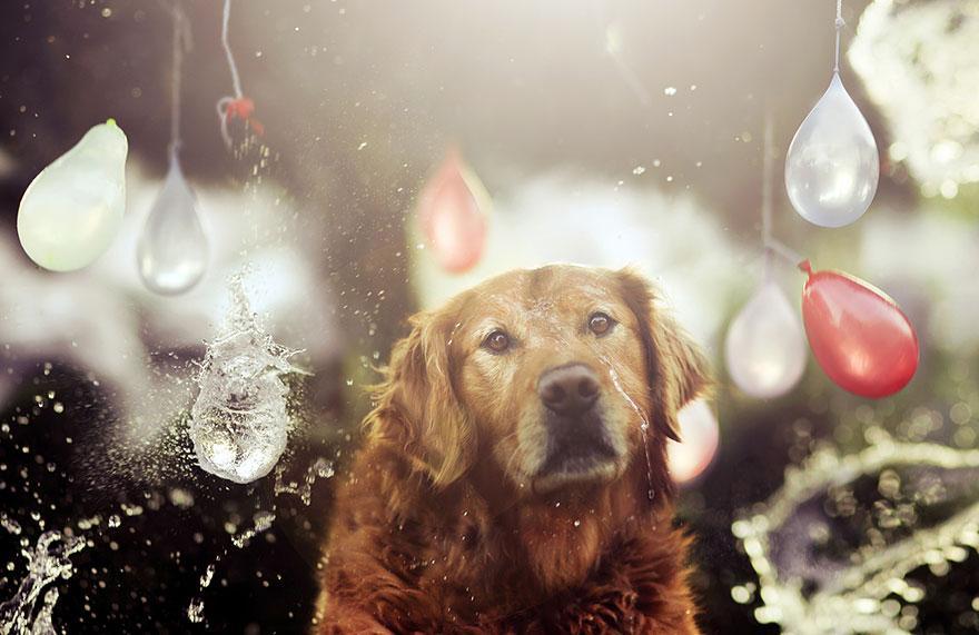 dog-photography-chuppy-golden-retriever-jessica-trinh-20.jpg