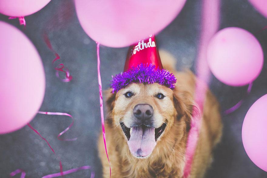 dog-photography-chuppy-golden-retriever-jessica-trinh-4.jpg