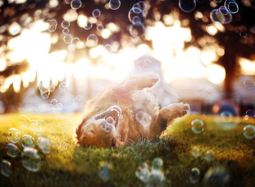 dog-photography-chuppy-golden-retriever-jessica-trinh-5.jpg