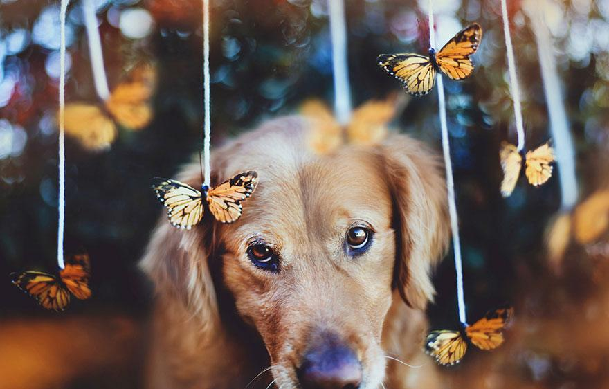 dog-photography-chuppy-golden-retriever-jessica-trinh-7.jpg
