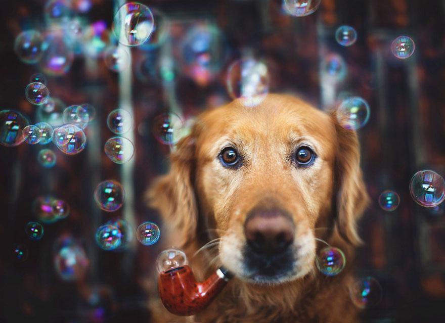 dog-photography-chuppy-golden-retriever-jessica-trinh-8.jpg