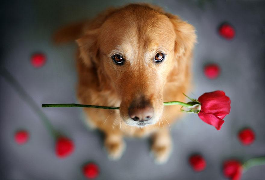 dog-photography-chuppy-golden-retriever-jessica-trinh-9.jpg