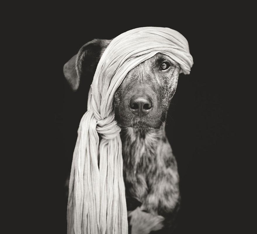 dog-portrait-photography-elke-vogelsang-1.jpg