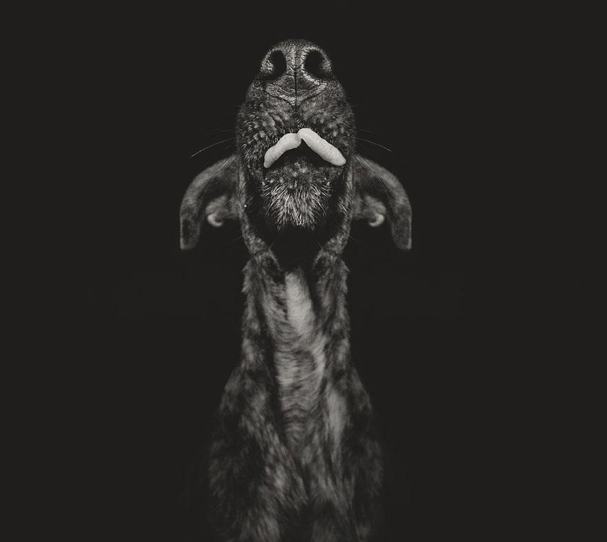 dog-portrait-photography-elke-vogelsang-10.jpg