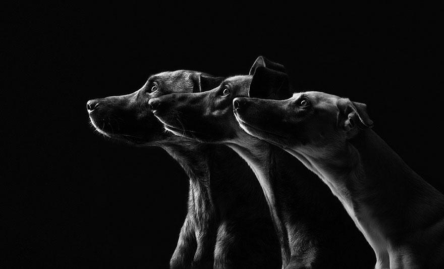 dog-portrait-photography-elke-vogelsang-11.jpg