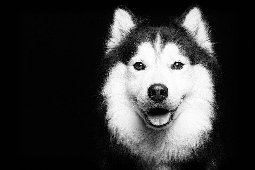 dog-portrait-photography-elke-vogelsang-12.jpg