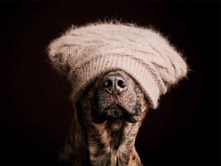 dog-portrait-photography-elke-vogelsang-13.jpg
