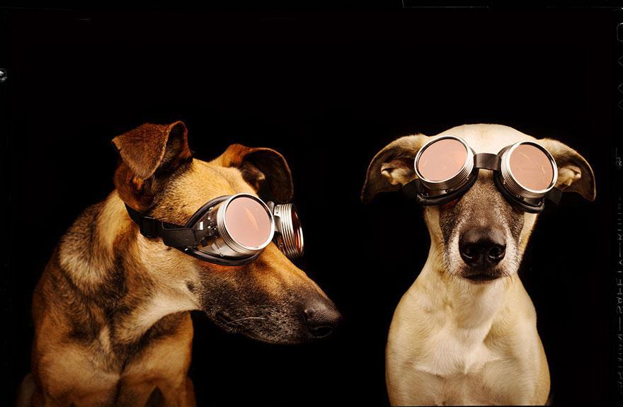 dog-portrait-photography-elke-vogelsang-17.jpg