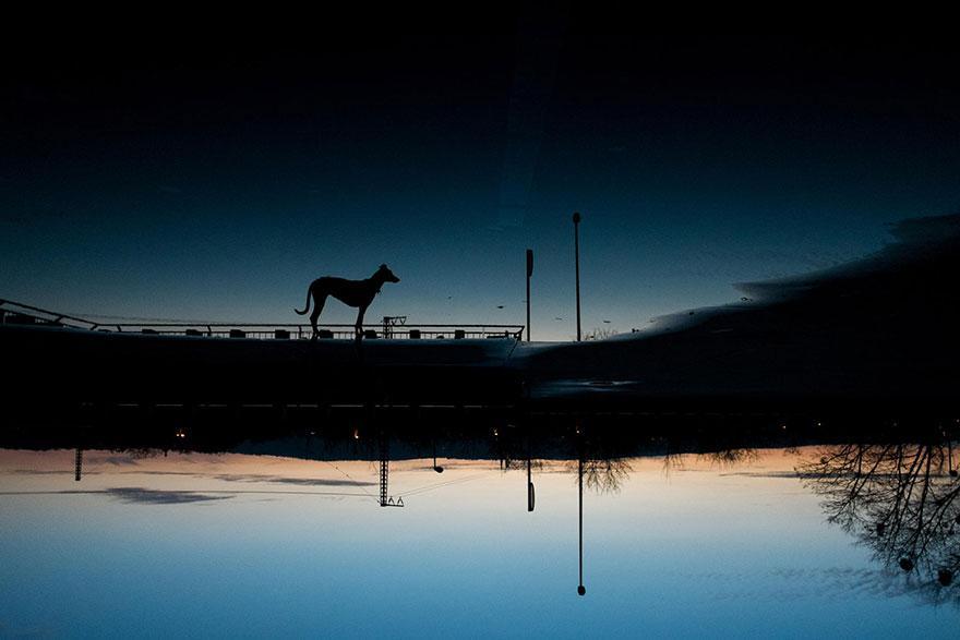 dog-portrait-photography-elke-vogelsang-22.jpg