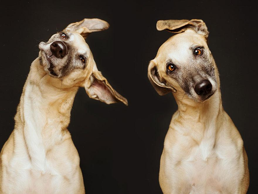 dog-portrait-photography-elke-vogelsang-28.jpg