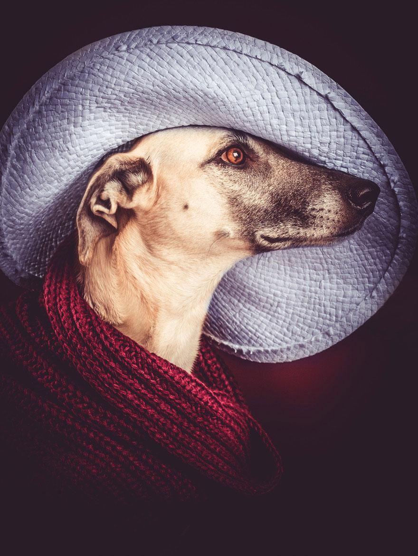 dog-portrait-photography-elke-vogelsang-3.jpg