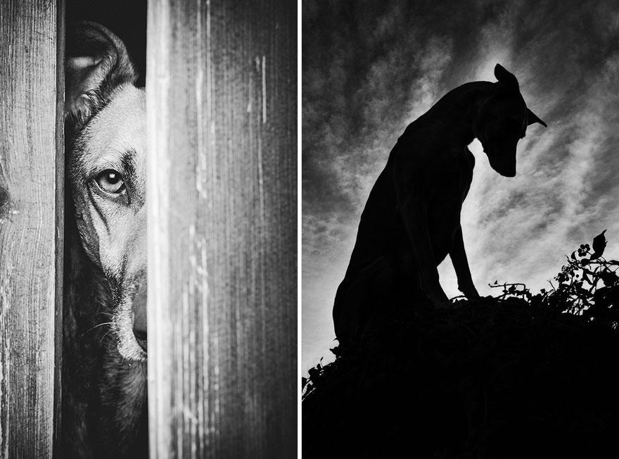 dog-portrait-photography-elke-vogelsang-31.jpg