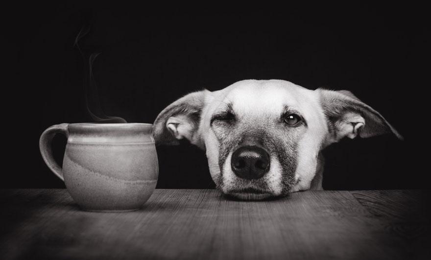 dog-portrait-photography-elke-vogelsang-33.jpg