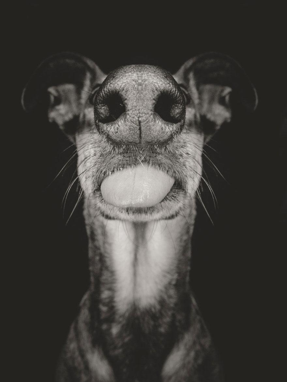 dog-portrait-photography-elke-vogelsang-8.jpg