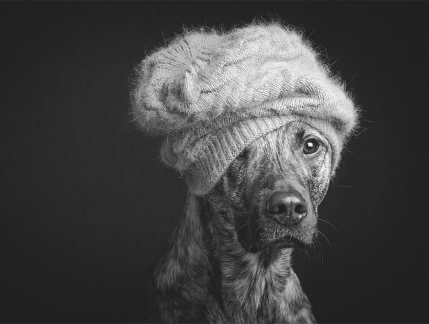 dog-portrait-photography-elke-vogelsang-9.jpg