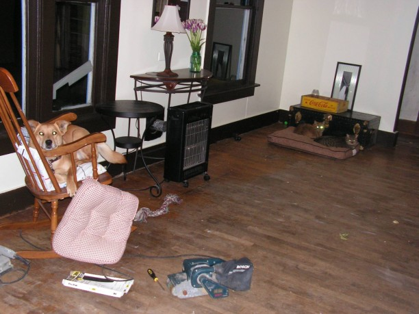 dog-steals-chair-612x459.jpg
