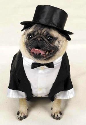dog-tuxedo_small1.jpg