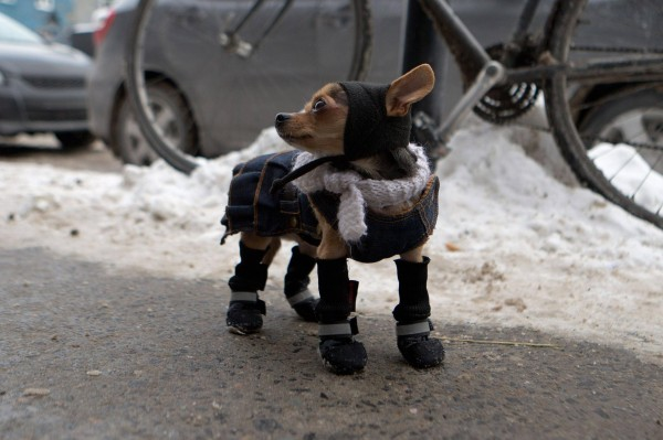 dog-winter-1-600x399.jpg