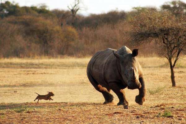 dog_vs_rhino.jpg