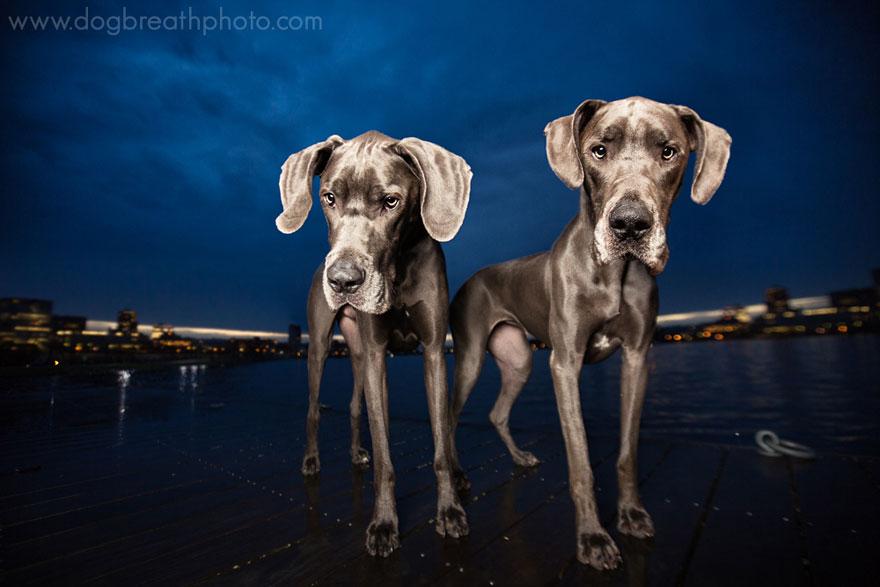 dogs-dog-breath-photography-kaylee-greer-10.jpg