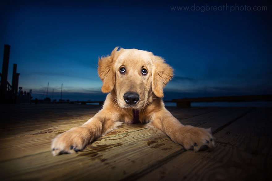 dogs-dog-breath-photography-kaylee-greer-13.jpg