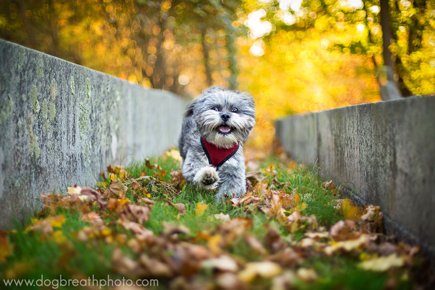 dogs-dog-breath-photography-kaylee-greer-14.jpg