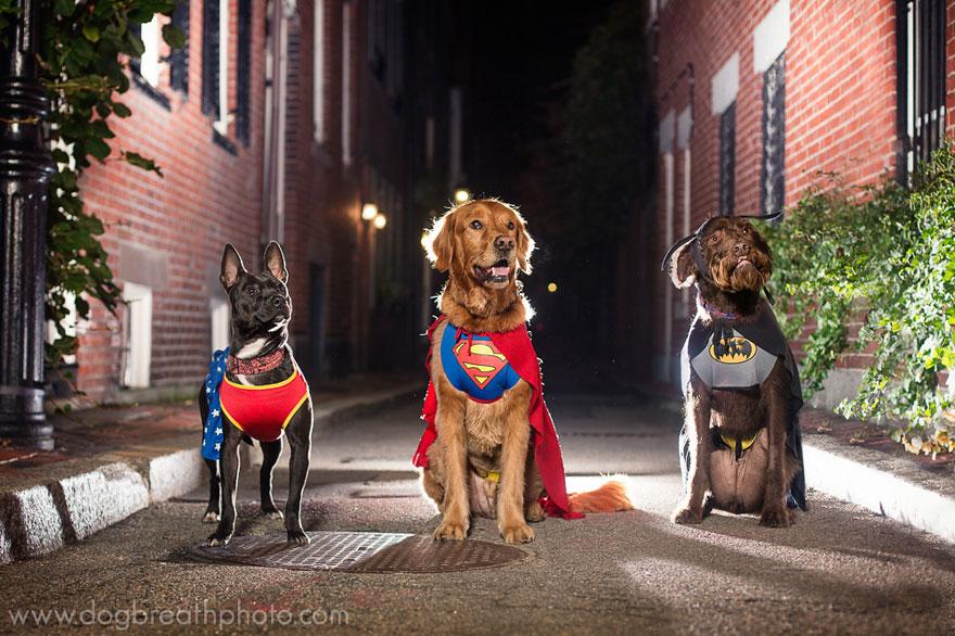 dogs-dog-breath-photography-kaylee-greer-16.jpg