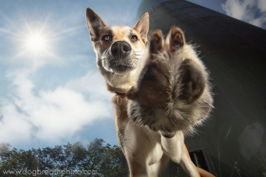 dogs-dog-breath-photography-kaylee-greer-17.jpg