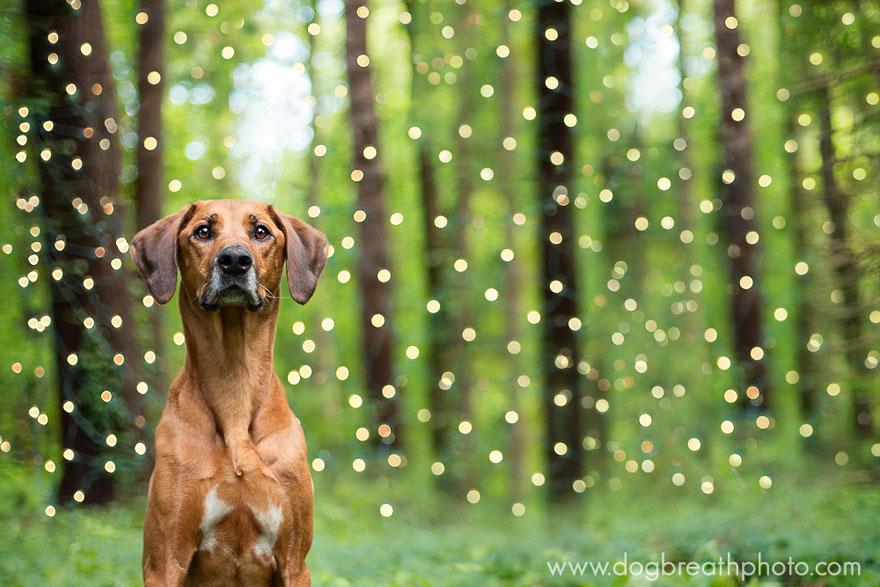 dogs-dog-breath-photography-kaylee-greer-19.jpg