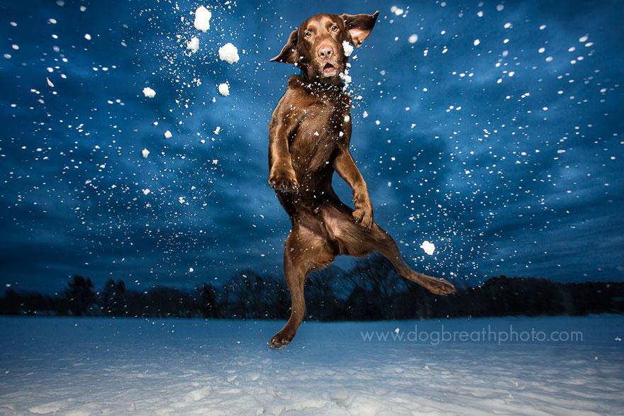 dogs-dog-breath-photography-kaylee-greer-2.jpg