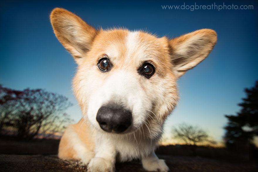 dogs-dog-breath-photography-kaylee-greer-20.jpg