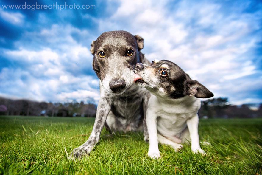 dogs-dog-breath-photography-kaylee-greer-22.jpg