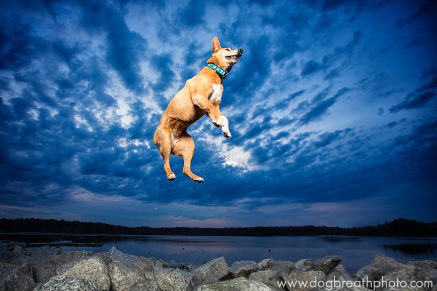 dogs-dog-breath-photography-kaylee-greer-25.jpg