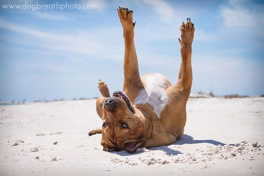 dogs-dog-breath-photography-kaylee-greer-27.jpg