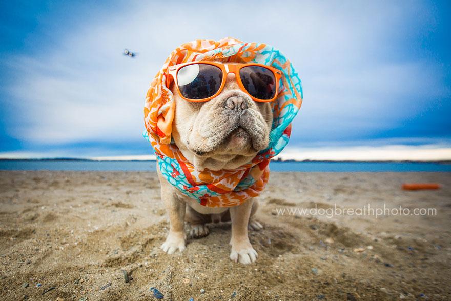 dogs-dog-breath-photography-kaylee-greer-28.jpg