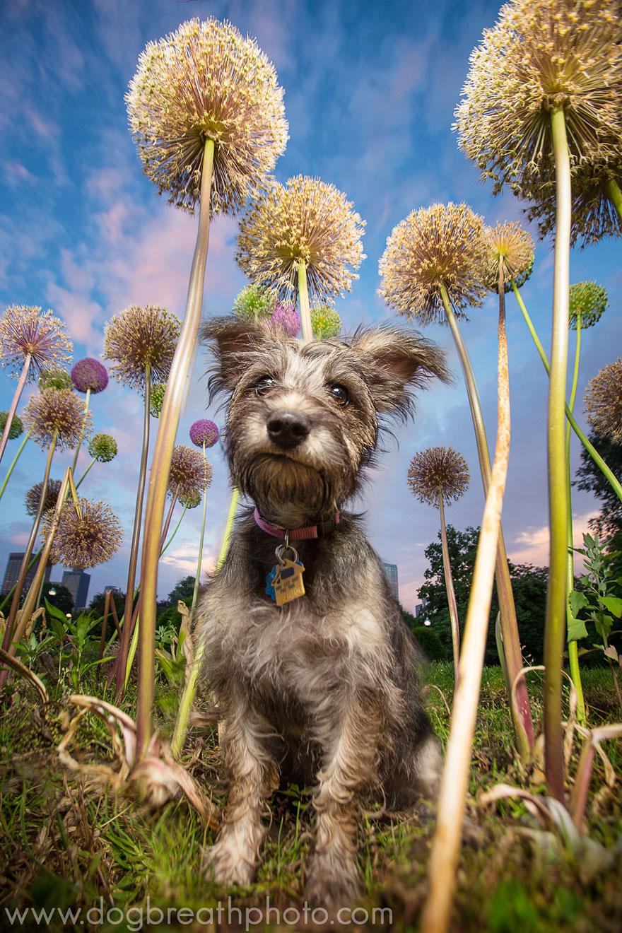 dogs-dog-breath-photography-kaylee-greer-43.jpg