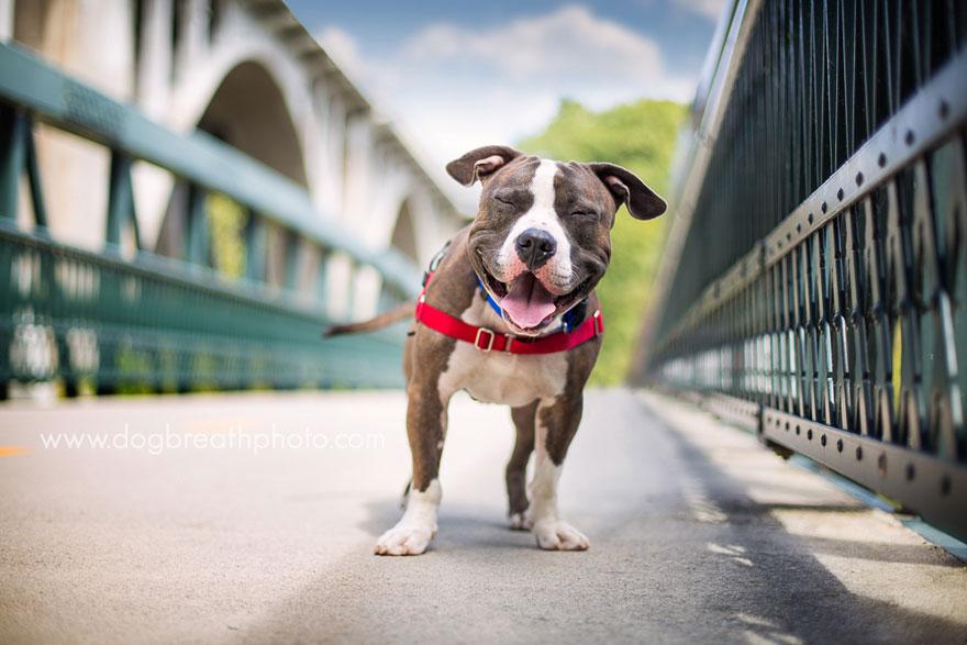 dogs-dog-breath-photography-kaylee-greer-5.jpg