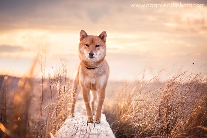 dogs-dog-breath-photography-kaylee-greer-7.jpg