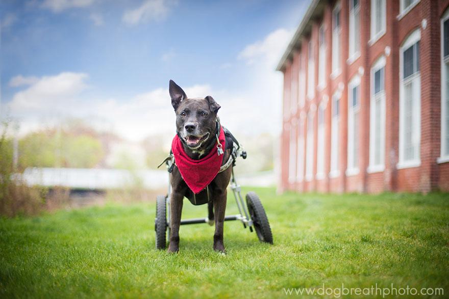 dogs-dog-breath-photography-kaylee-greer-9.jpg