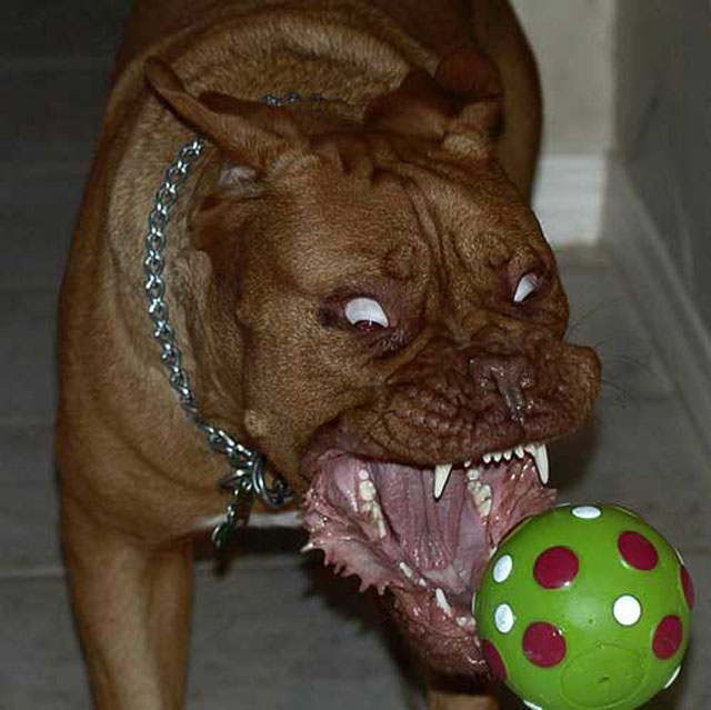 dogs-funny-faces-ball.jpg